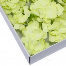 Muilo hortenzija. Spalva švelniai žalia