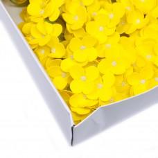 Muilo hortenzija. Spalva geltona