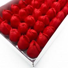 Muilo tulpės. Spalva raudona
