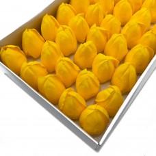 Muilo tulpės. Spalva geltona