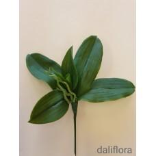 Orchidėjų lapai