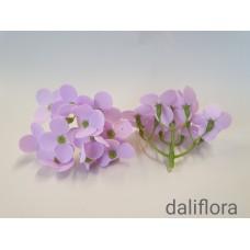 Muilo hortenzija