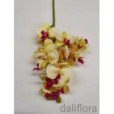 Dirbtinė smulkiažiedė orchidėja.