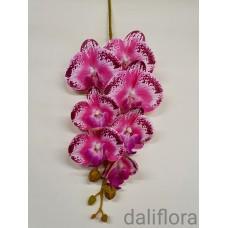 Dirbtinė orchidėja. Marga