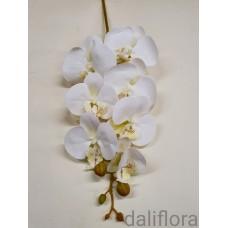 Guminė orchidėja. Spalva balta