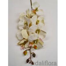 Dirbtinė orchidėja. Spalva gelsvai žalsva