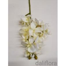 Smulkiažiedė orchidėja. Spalva balta