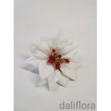 Kalėdinė gėlė