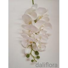Veliūrinė orchidėja. Spalva balta