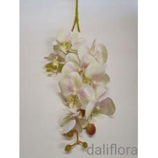 Guminė orchidėja. Spalva žalsva