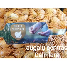 Svogūnų sėjinukai STURON 1kg