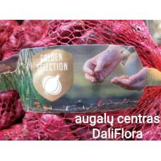 Svogūnų sėjinukai RED KARMEN 0.5 kg