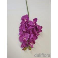 Smulkiažiedė orchidėja. Spalva violetinė