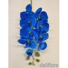 Veliūrinė orchidėja. Spalva mėlyna