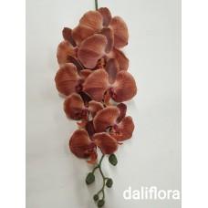 Šilkinė orchidėja. Spalva ruda