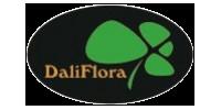 Gėlės DaliFlora, Dalios Ruminienės ind. veikla Nr.918486